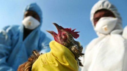 Bir salgın alarmı daha: Çin'de kuş gribinin yeni bir türü ilk kez bir insana bulaştı
