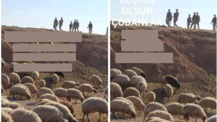 ''TİGEM arazisine komşu köylerde koyun kovalıyor, koyunlara gözaltı işlemi uyguluyorlar''