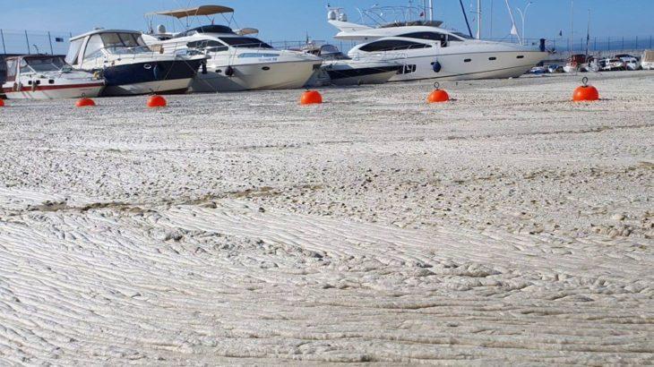 Marmara için acil eylem çağrısı: Deniz ölüyor, denizin zamanı kalmadı