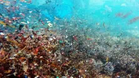 Marmara'nın içine düştüğü yeni felaket: Mikroplastik