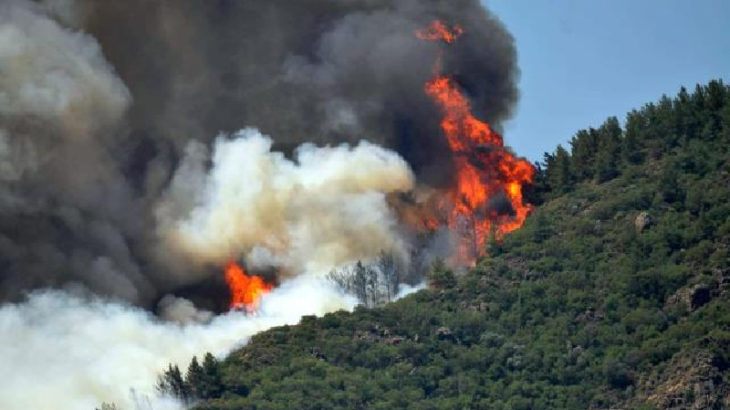 Valilik bir yandan dağda yangın söndürdü, diğer yandan yamaçtaki koy için talana onay verdi