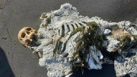 Samsun'da bulunan iskelet Adli Tıp'a gönderildi