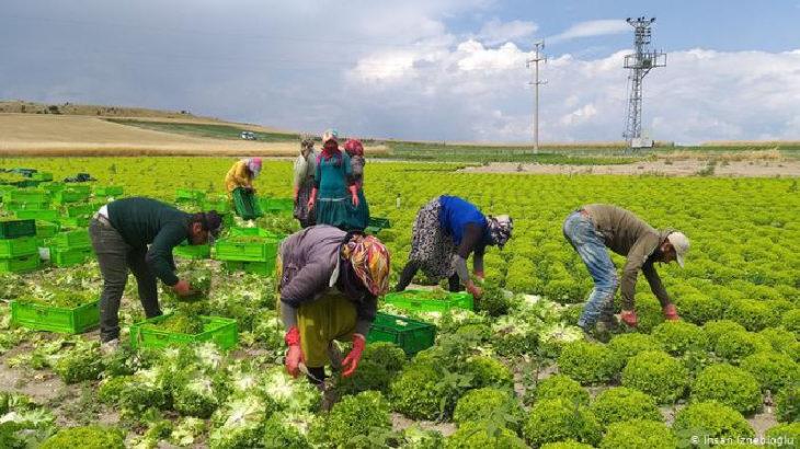 İHD, mevsimlik işçilerin yaşadıkları sorunları raporlaştırdı