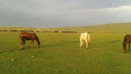 Ardahan'ın iki köyü daha karantina altına alındı