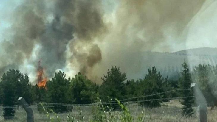 Atatürk Orman Çiftliği arazisinde çıkan yangın kontrol altına alındı: 1 gözaltı