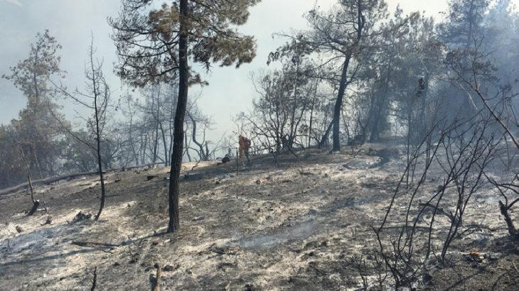 Bilecik'te büyük orman yangını: Binlerce kızılçam zarar gördü