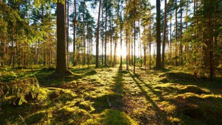 Orman yangınlarına çözüm: Orman yasağı!