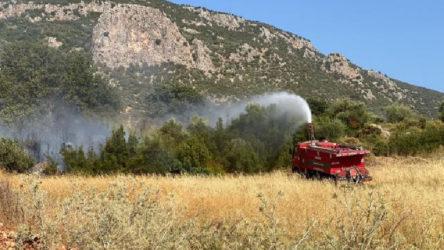 Kaş'ta yangın: 200 zeytin ağacı kül oldu