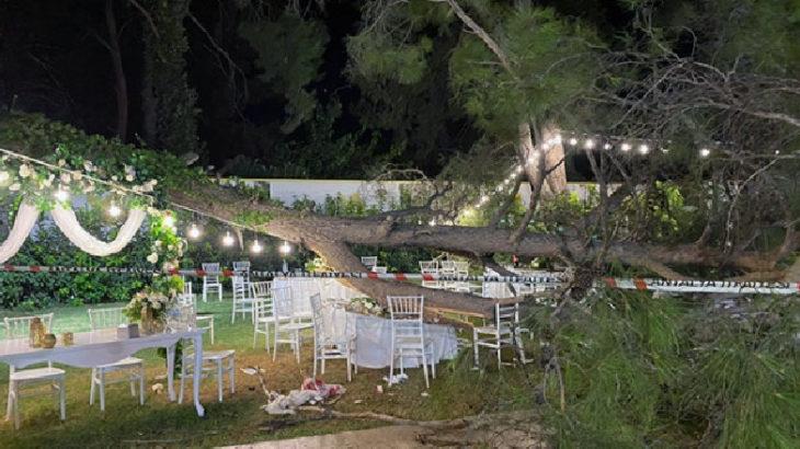 Kır düğününde davetlilerin üzerine ağaç devrildi: 2'si ağır çok sayıda yaralı