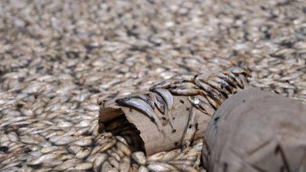 Memleketten manzaralar: Binlerce balık oksijensizlikten öldü