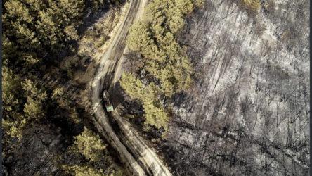 Bodrum'da yangın kontrol altına alınamıyor:  Hayvanlar yangından kaçmaya çalışıyor