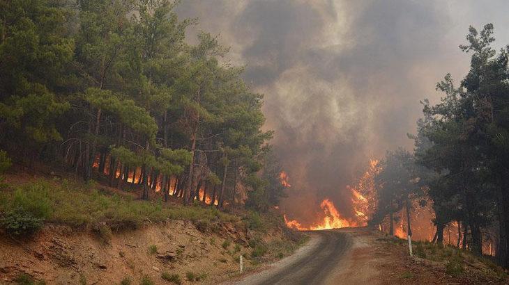 İzmir'in Karşıyaka ilçesindeki ormanlık alanda yangın çıktı