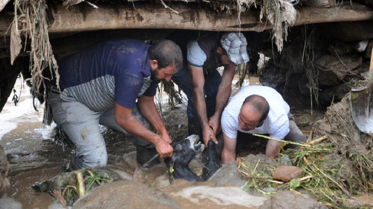 Yüksekova'da sel: Yüzlerce küçükbaş hayvan öldü