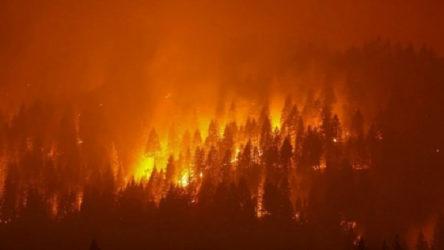 Manavgat'tan sonra Kaş'ta da orman yangını