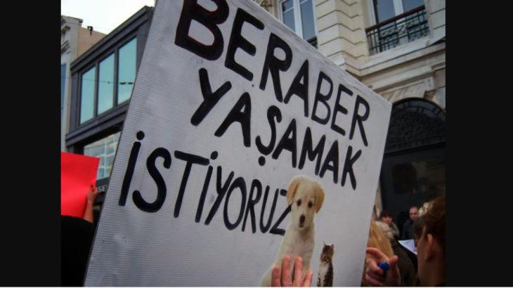 Ankara'da köpekleri öldürüp yan yana dizmişler!
