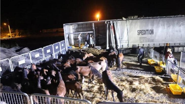 Hopa'da at kaçakçıları yakalandı