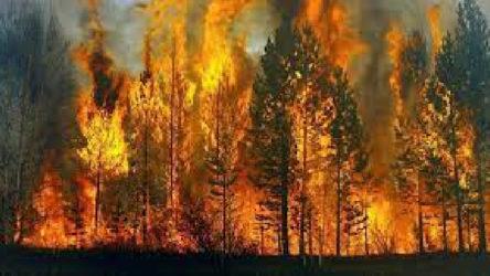 KCK'dan orman yangınları açıklaması: Haberler tamamen yalandır