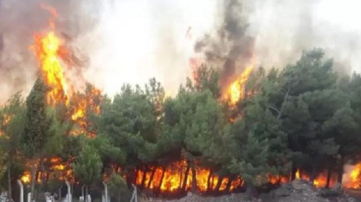 Manavgat, Gündoğmuş ve Marmaris'te yangınlar kontrol altına alındı