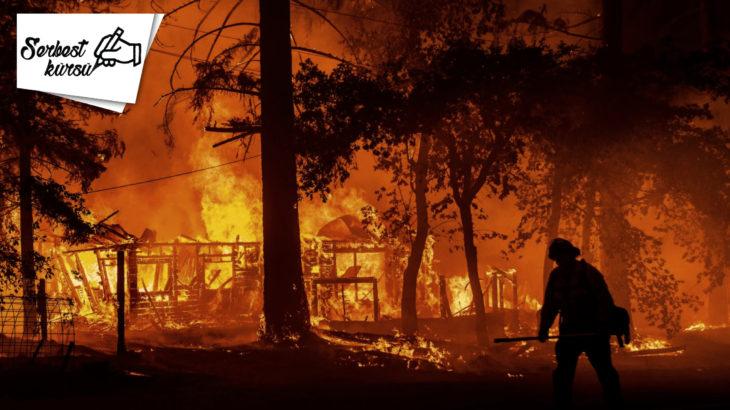 Tülin Tankut yazdı: Yangın felaketine uğrayan ağaçların dili olsa da...