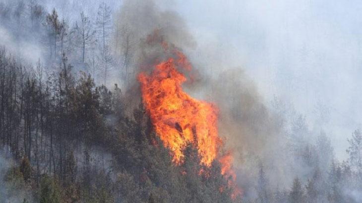 Muğla'da bir yangın daha!