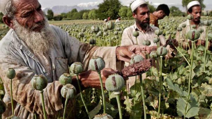 Taliban, Afganistan'daki 'afyon' üretimini durdurdu mu? Afganistan'da uyuşturucu üretim 'vergisi'