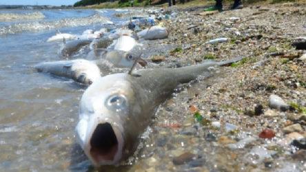 Balık ölümleri ile ilgili inceleme başlatıldı