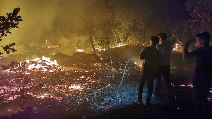 Bodrum'da yangın: Tarım arazilerine sıçradı